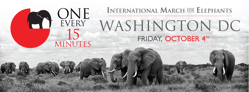 IvoryBelongsToElephantsFB